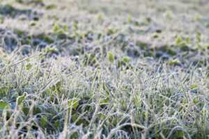 Follow these tips to get your native plants ready for winter weather.