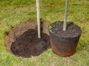 Protect your new trees with tree shelters from American Native Plants.