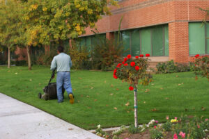 Consider using native plants for your commercial property!