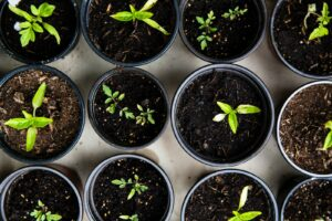 How to Care For Native Plant Seedlings During The Off-Season