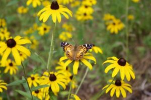 How to Prep Native Plants for the Fall Season